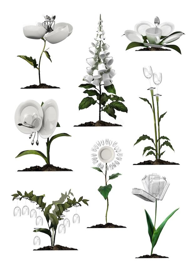 Dish-Plant Studies